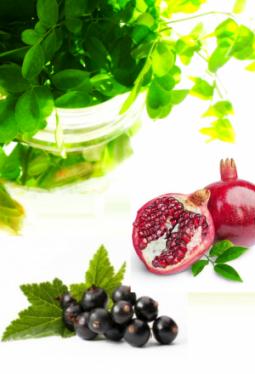 Tee-Zeit Moringablätter mit Granatapfel-Johannisbeere