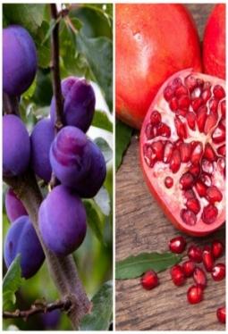 Konfitüre Pflaume & Granatapfel 85%