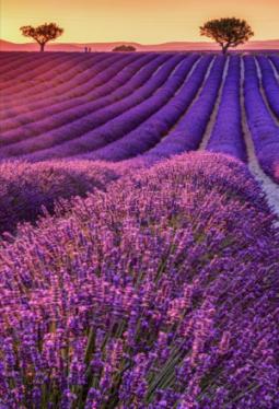 Schafmilchseife Lavendel Bio 100g