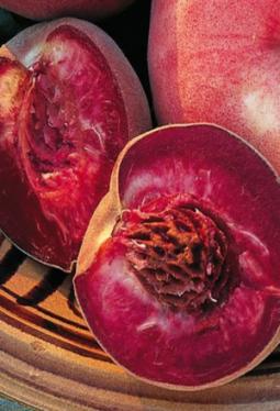 Crema Balsamica Rotä Wiibärgpfirsich