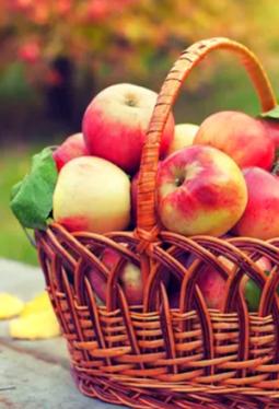 Balsam-Essig Apfel Bio-Qualität