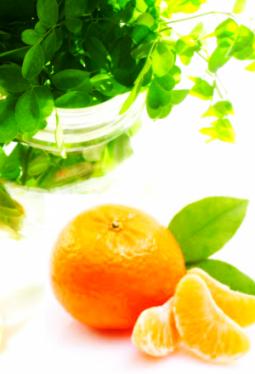 Tee-Zeit Moringablätter mit Orange