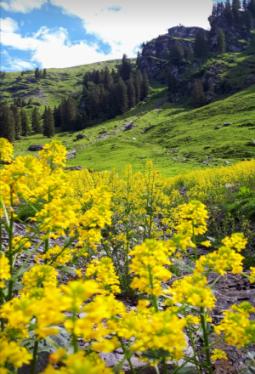 Saunaöl Alpenkräuter 100ml