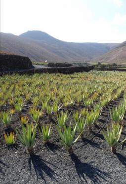 Salzpeeling Aloe Vera 200ml